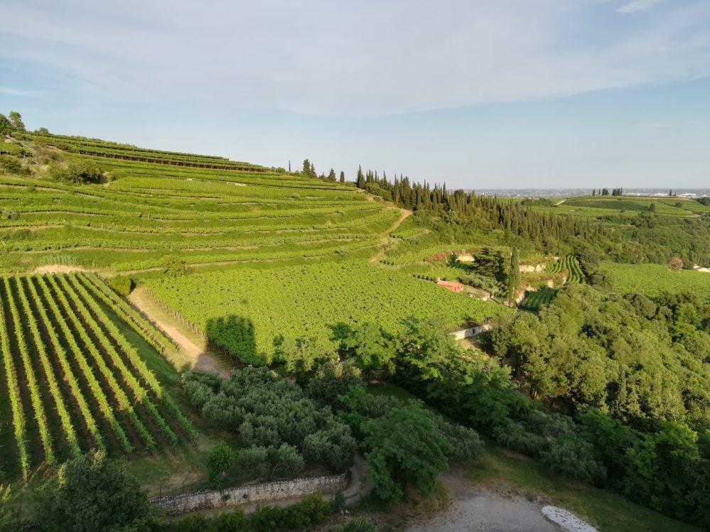 die Weinstrassen